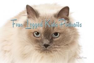 Shine Photo Services: Pet Portraiture