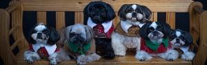 Shine Photo Studio Boutique Pet Photography