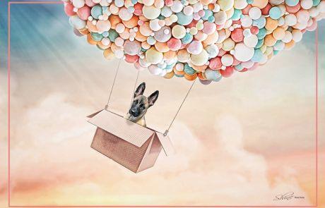 Bunch Of Balloons - Covid Art